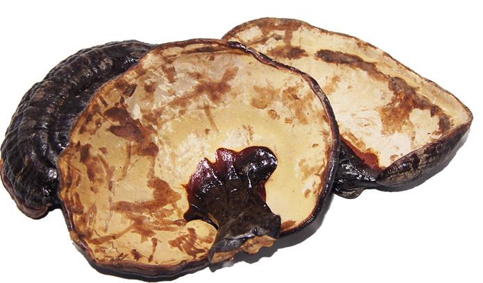 灵芝是古今中医药宝库中的珍品