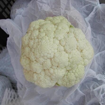 供应 保鲜白花菜