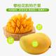 热带水果 攀枝花特产芒果 轩果香凯特芒果  10斤装净果 果园直供 果超大