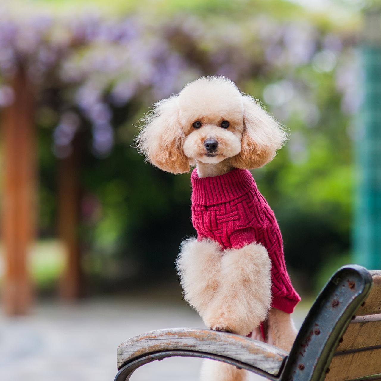 时尚美观可爱腈纶材质休闲宠物装