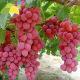 供应新鲜红提 红宝石葡萄广西精品水果红提葡萄