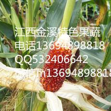 小巧可爱呈椭圆形—草莓玉米