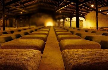 白酒行业未来将如何发展?