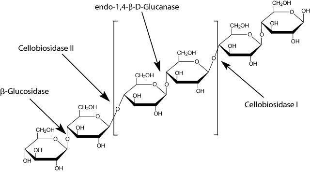 木聚糖酶家族中包含哪些生物酶?它们有什么作用?