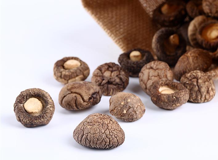 老菇棚栽培食用菌的障碍分析