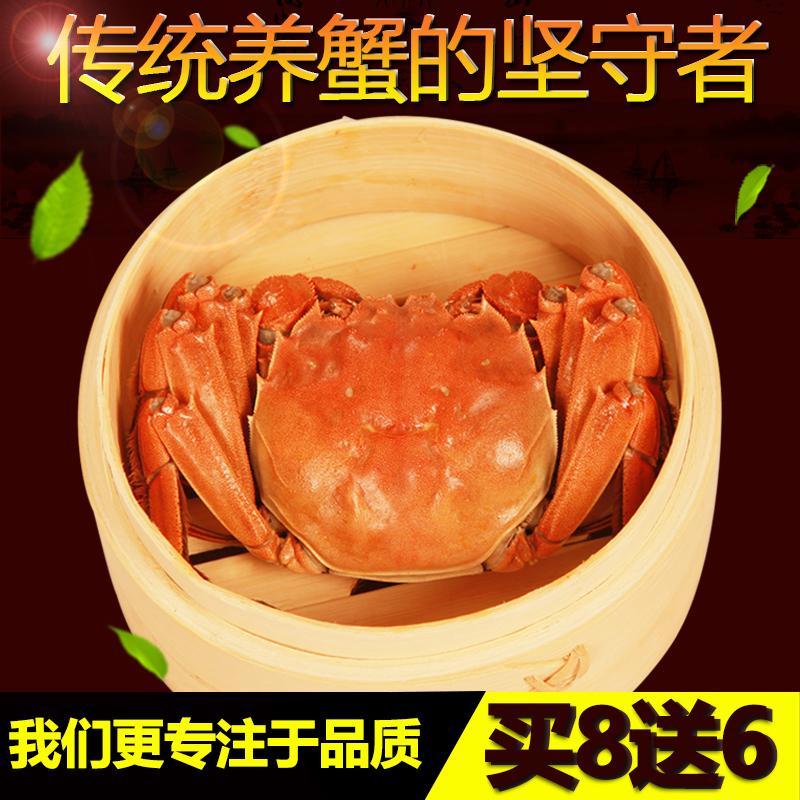 多送2只正宗阳澄湖大闸蟹礼盒2.7-2.4两8只全母大闸蟹鲜活螃蟹
