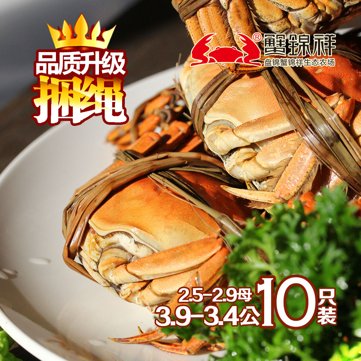 阳澄鲜活螃蟹湖中明珠大闸蟹3-3.2母8只