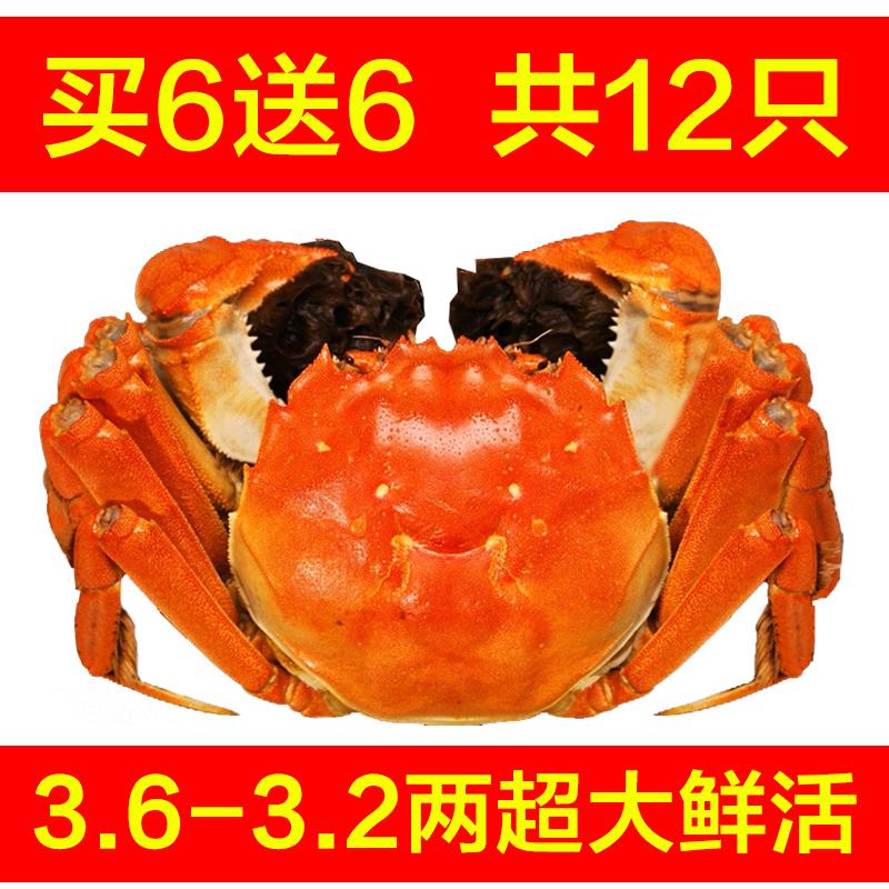 现货鲜活大螃蟹母大闸蟹2-2.3两 10只装