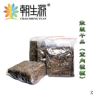 金线莲干品 福建金线莲 南方虫草 药王 养生茶 养肝茶