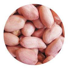 供应 厂家直销  花生米 榨油米 统货 欢迎询价