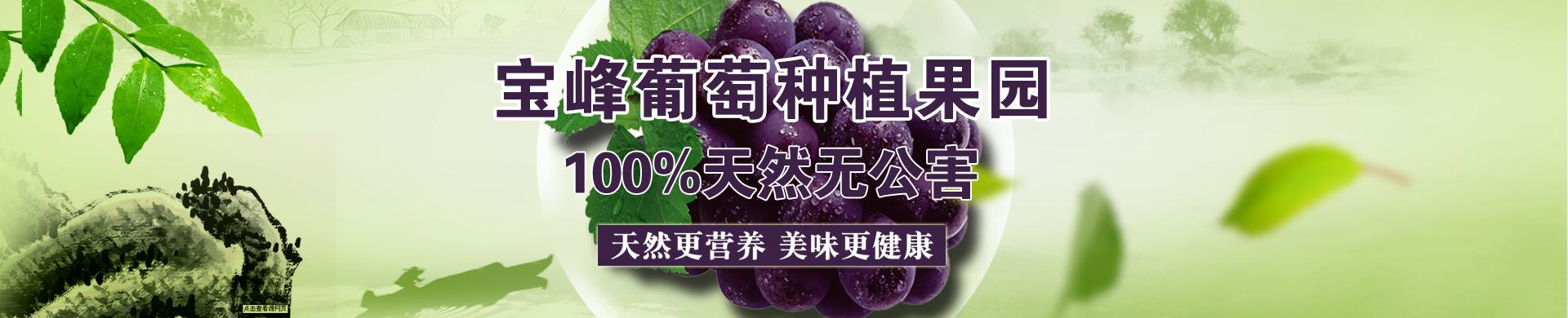 宝峰葡萄种植果园