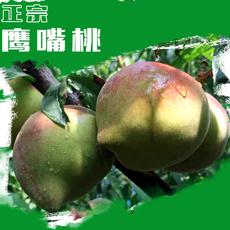 【热卖】有机鹰嘴桃十斤装特级果128一箱!