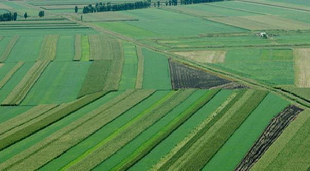 十三五:推进农业现代化 转变农业发展方式