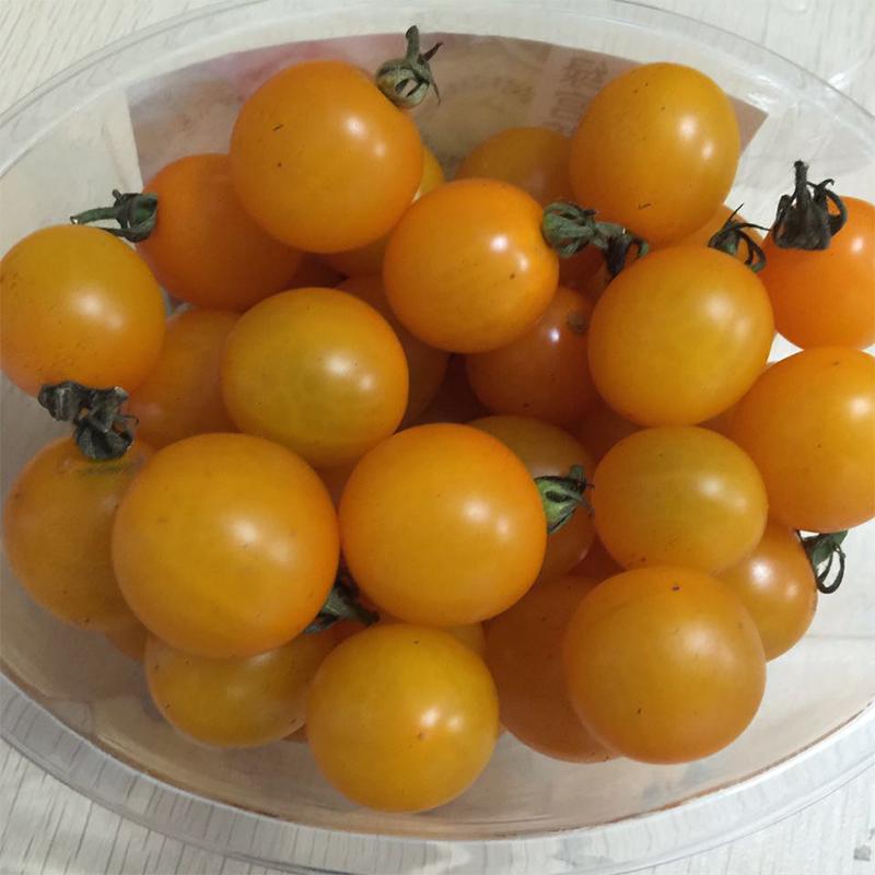 绿宫坊特色西红柿,新鲜圣女果,小番茄全面上市