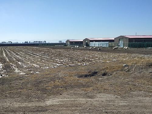 厂家供应隆盛无公害散养猪牛羊鸡,内蒙古优质的隆盛无公害散养猪牛羊鸡生产基地