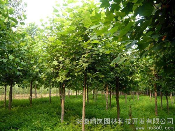 供应苗木园林园林工程1
