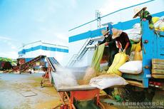 水稻收购吉林粮食