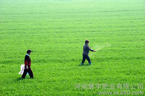 供应惠翔小麦用肥有机肥料0