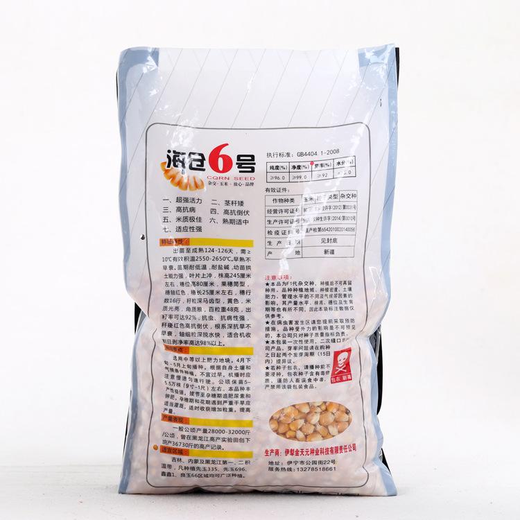 玉米种子 海仓六号   耐低温 抗倒伏3