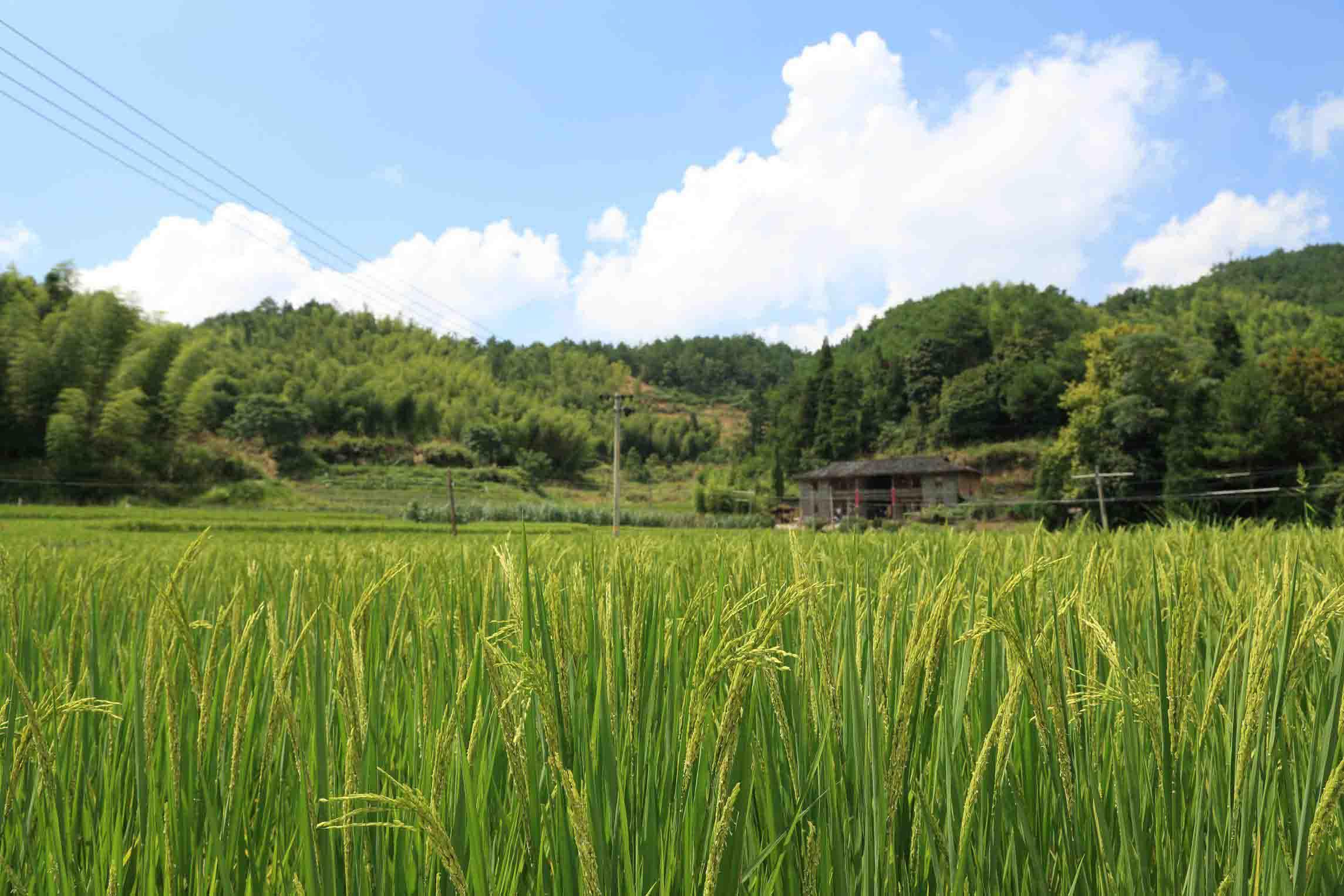 优质的富硒大米-富硒大米的批发价格是多少