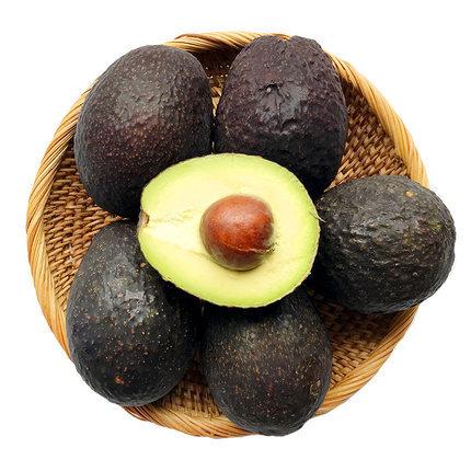 墨西哥牛油果中果進口鱷梨新鮮水果油果寶寶輔食