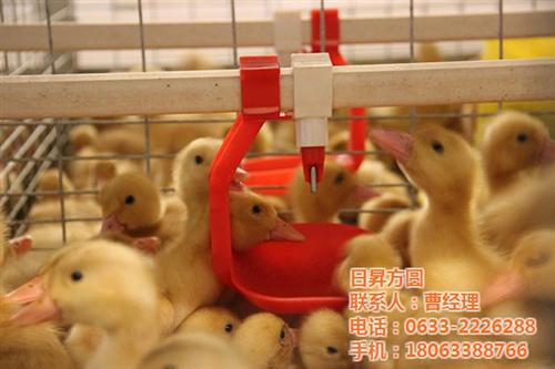 养鸭笼具经销商,养鸭笼具,方圆笼具(在线咨询)