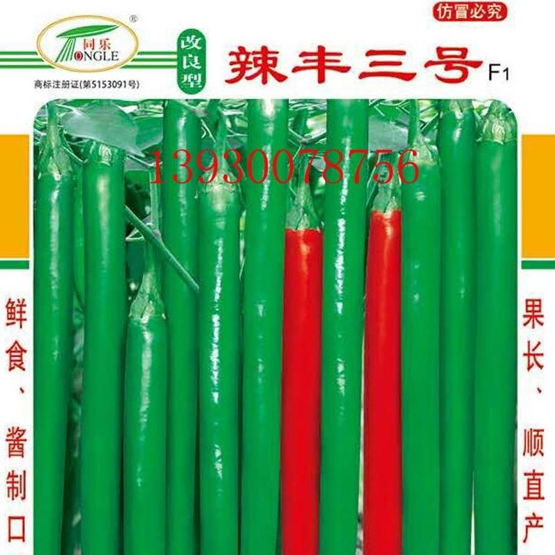 高产线椒——改良型辣丰三号