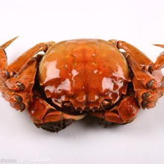 3斤装大闸蟹大公蟹3-4两鲜活螃蟹现货断脚蟹残蟹残次蟹非母蟹顺丰