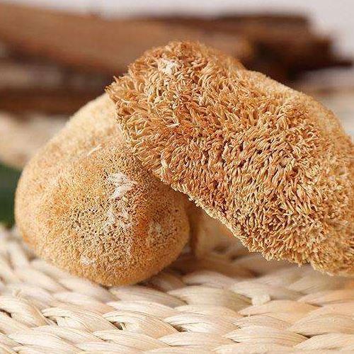 顺丰直达现摘四川新鲜猴头菇鲜蘑菇香菇非东北猴头菇500g