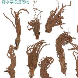 卷柏提取物 穗花杉双黄酮 10-20%