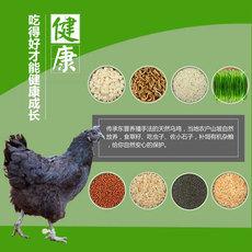略陽生態烏雞 林間散養土雞 健康滋補 烏雞批發 產地直供量大從優 公雞3-3.5斤
