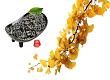 「产·城41」来凤:生长在山间的藤茶财富