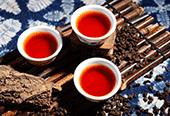 普洱贡茶的简介