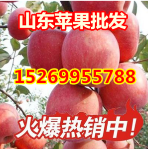 山东红富士苹果产地直销 条红 片红 口感脆甜  价格便宜