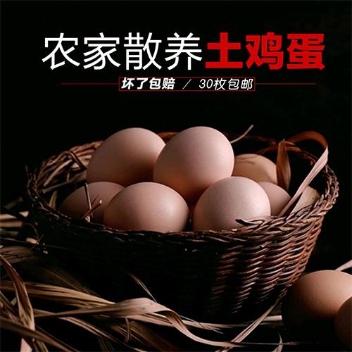 散养土鸡蛋 营养丰富 蛋白质高