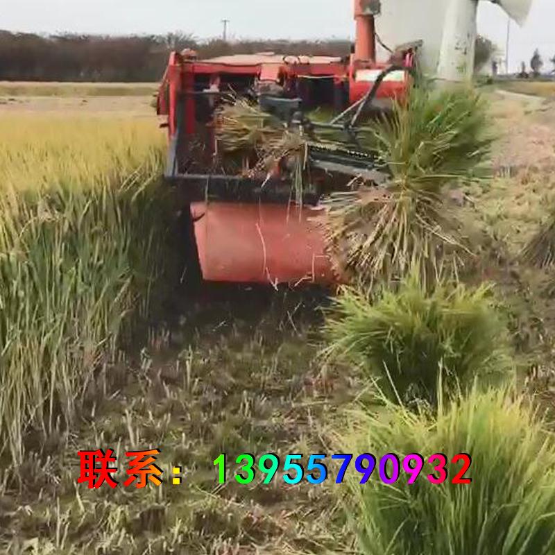 全自动水稻收割打捆打包一体机