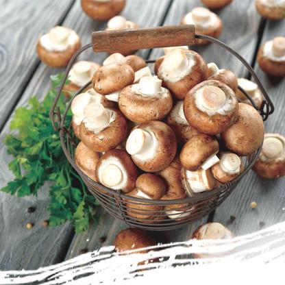 热销香菇 产地优良 价格实惠 口感香醇 营养丰富