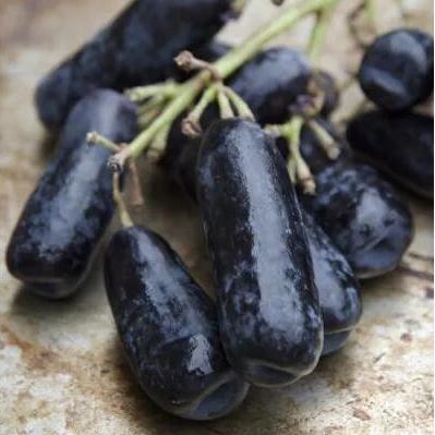 供应 提新鲜黑加仑黑手指无籽提子葡萄水果2斤装