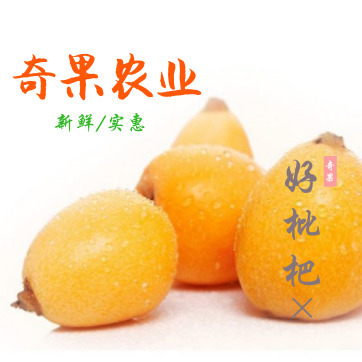 奇果农业 攀枝花米易枇杷大果早春枇杷 时令新鲜水果 【5斤申通包邮】
