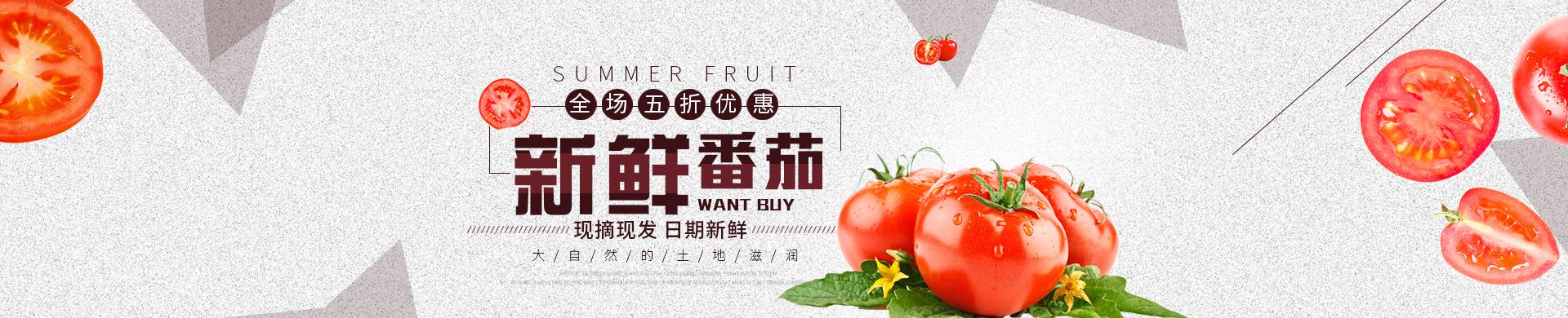 新鲜番茄求购