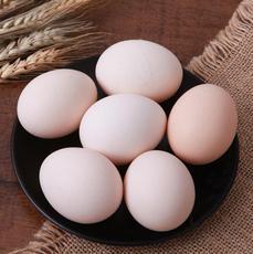 供應 生態散養土雞蛋雞蛋營養豐富