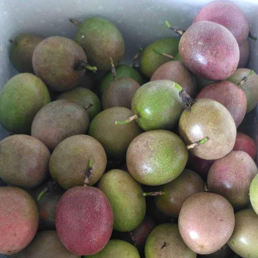 广西玉林百香果产地酸酸甜甜百香果西番产地批发零售