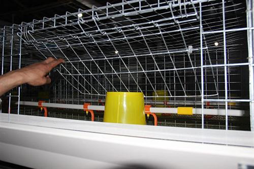 养殖肉鸭设备_方圆笼具_养殖肉鸭设备价格