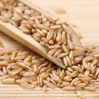 供应  裸燕麦粒 五谷杂粮粗粮
