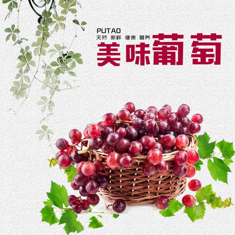 新鲜葡萄夏黑 巨峰 阳光玫瑰 醉金香 品种齐全 营养美味