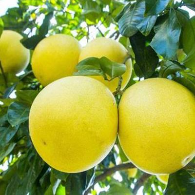 梅州同创农业发展有限公司