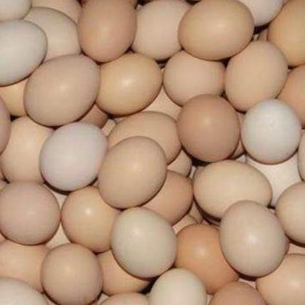 供應 鮮雞蛋原生態散養土雞蛋