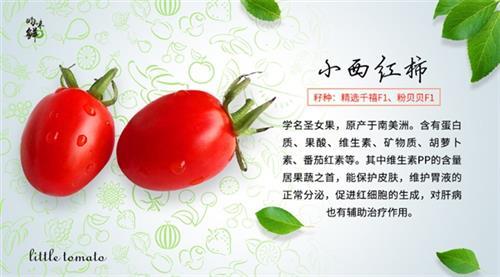 天津有機蔬菜、青昀初陽、天津有機蔬菜基地
