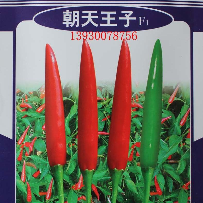 朝天王子高产单生朝天椒辣椒种子