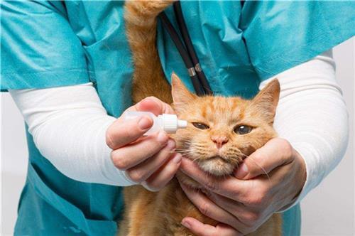 在线宠物医院|宠物医院|贝贝宠物俱乐部(在线咨询)